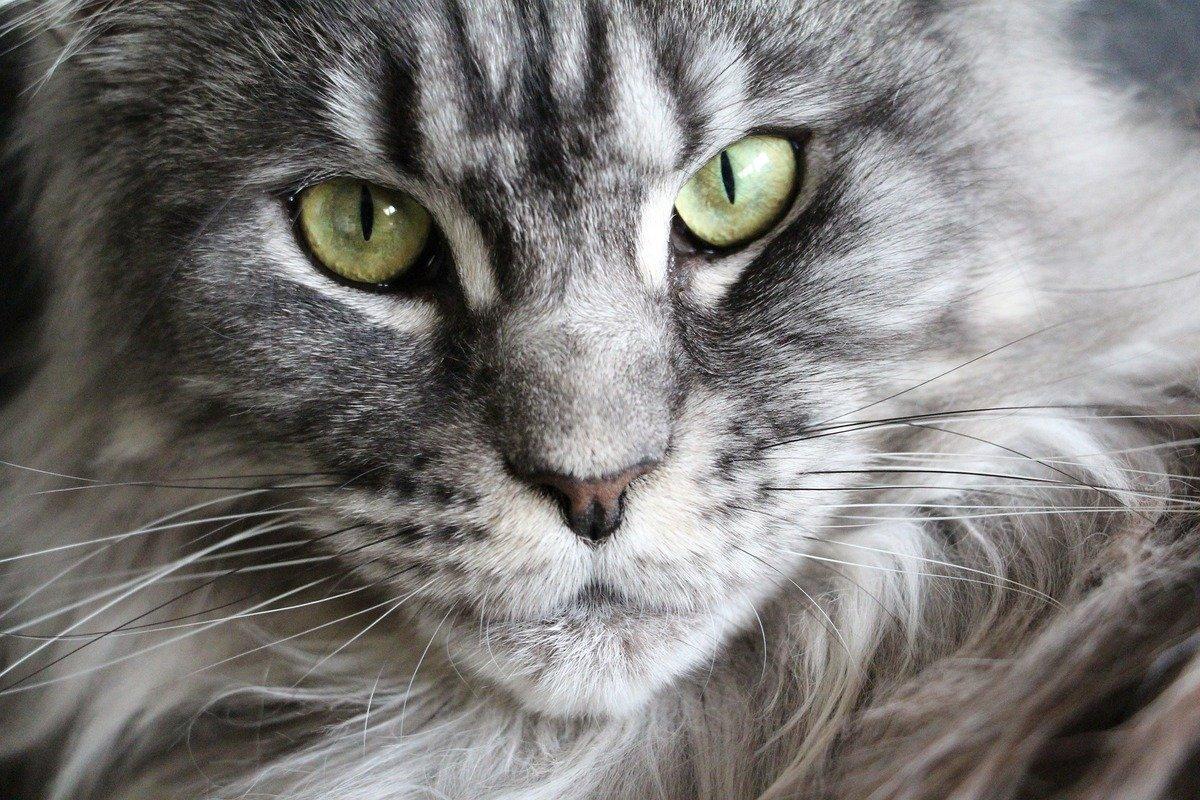 Katzengesicht mit grünen Augen