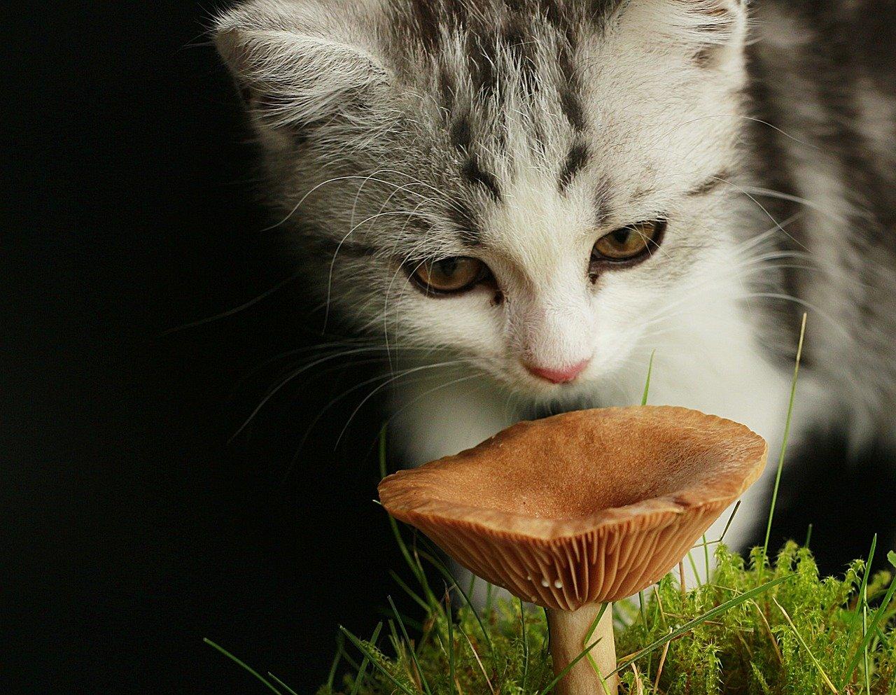 Junge Katze sitzt im Gras und schnuppert an einem Pilz