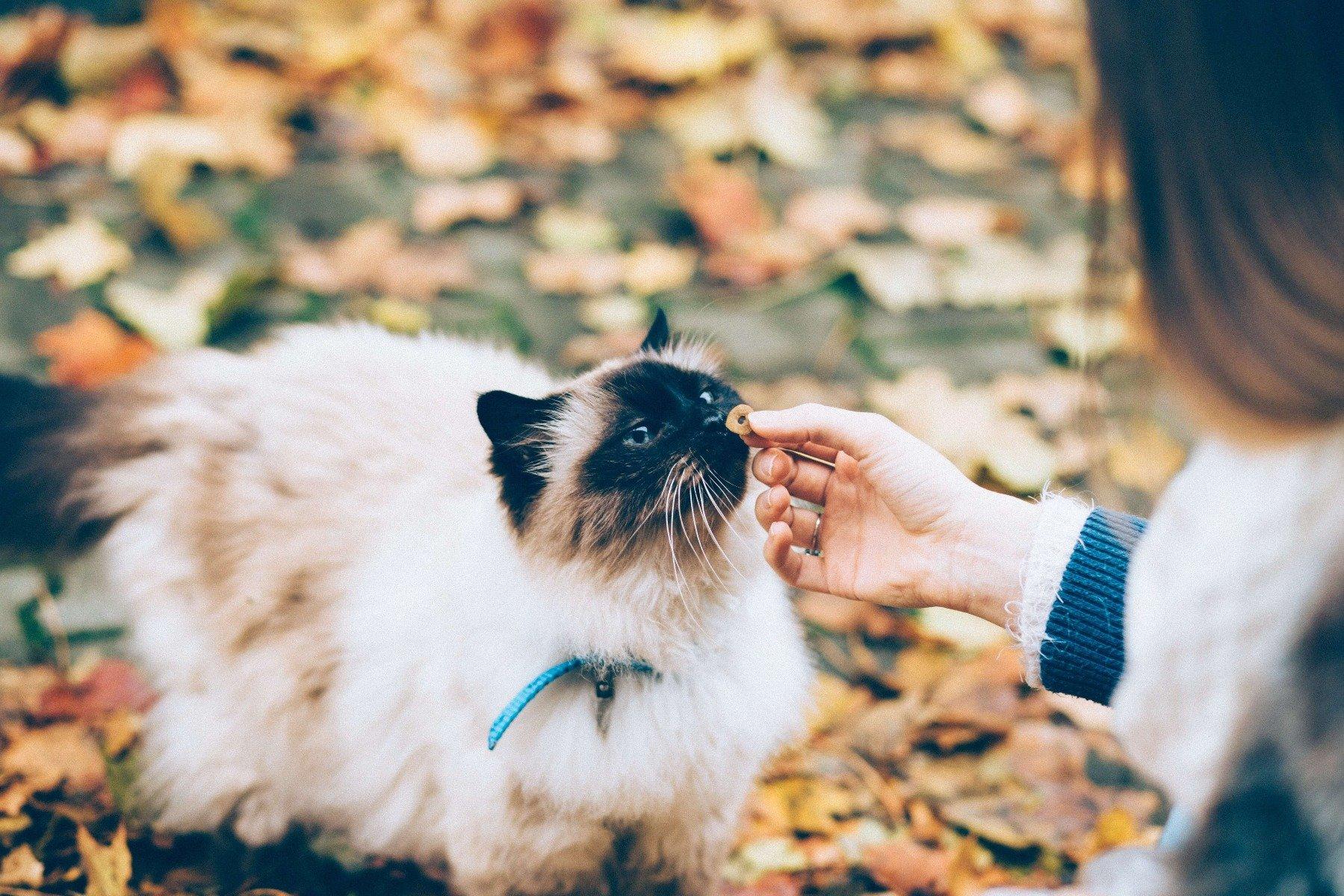 Zwei Katzen teilen sich Futter aus dem Napf