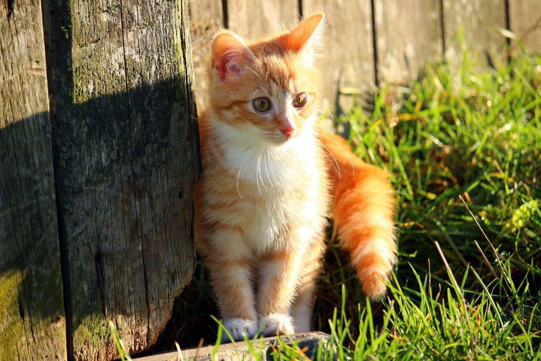 Rotes Kätzchen sitzt im Gras