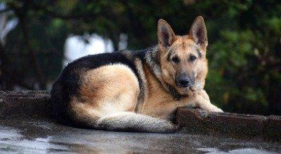Bauchspeicheldrüsenerkrankung beim Hund: Formen, Diagnose, Behandlung und Progonose