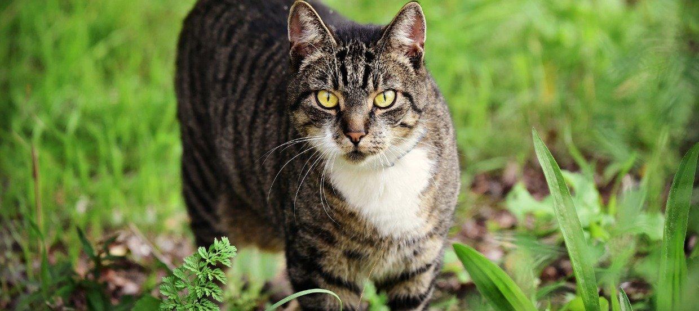 Können Katzen Borreliose bekommen?