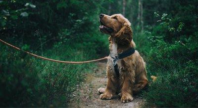 Gassi gehen: So ist die tägliche Runde gesund für Hund & Halter