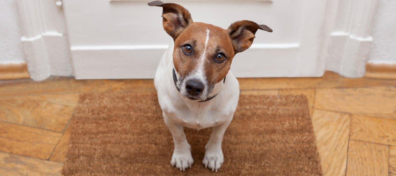 Das Coronavirus: eine Gefahr für Hund und Hundebesitzer?