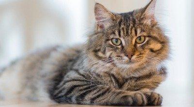 Hilfe, die Katze soll Diätfutter fressen