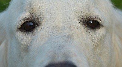 Epilepsie beim Hund: Was bedeutet es, wenn im Gehirn des Vierbeiners ein Gewitter tobt?