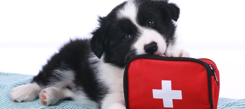 Erste Hilfe beim Hund kann Leben retten