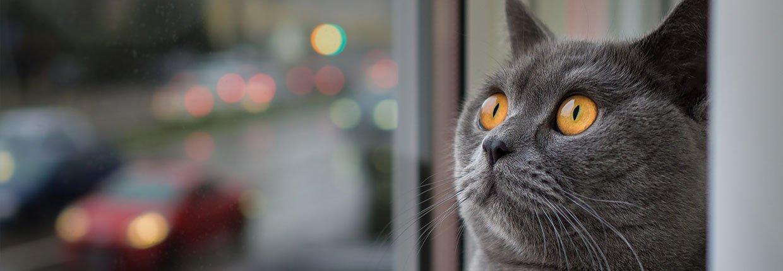 Katze in der Mietwohnung – So klappt das harmonische Zusammenleben
