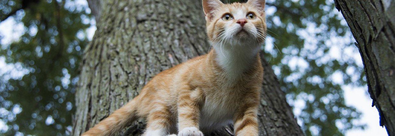 """Bandscheibenvorfall – wenn die Katze plötzlich """"Rücken"""" hat"""