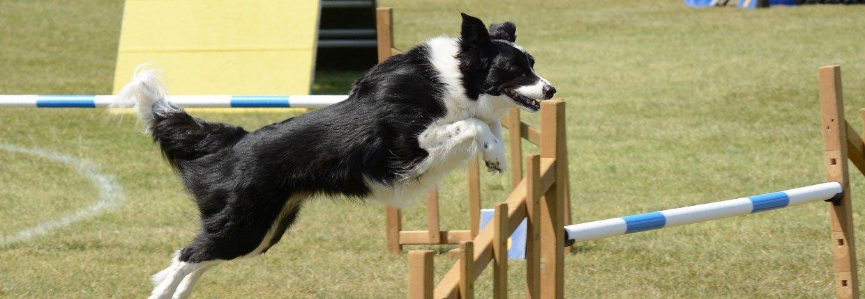 Agility - Fördert die Zusammenarbeit zwischen Mensch und Hund