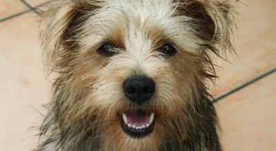 Hundegebiss: Wie sollte ein korrektes Gebiss beim Hund aussehen?