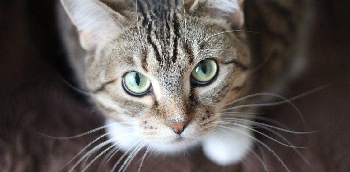 Katzenfutter ohne Getreide – nur ein Trend oder wichtig für die Gesundheit?
