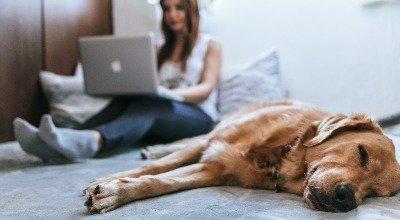 Homeoffice mit Hund - so klappt es mit dem Bürohund