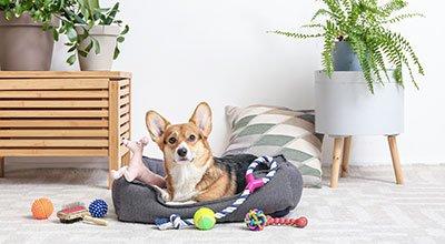 Erstausstattung für Hunde - das brauchen Sie, wenn ein Vierbeiner einzieht