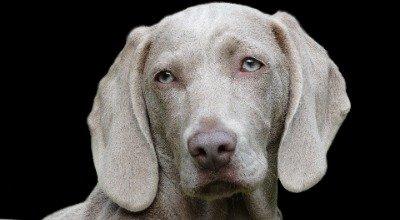 Magendrehung beim Hund: Ursachen, Symptome, Behandlung und Vorbeugung