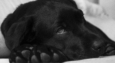 Wenn der Hund Schnupfen hat – Ursachen, Symptome und Behandlungsmöglichkeiten