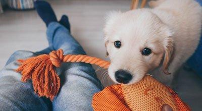 Hund drinnen beschäftigen - artgerechte Auslastung zu Hause
