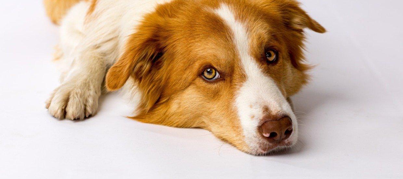 Hund entwurmen – Wie oft und mit welcher Wurmkur?