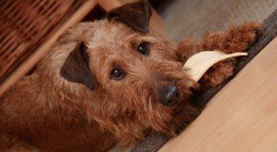 Was dürfen Hunde nicht fressen?
