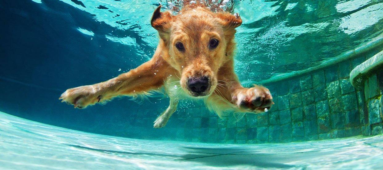 Hund im Wasser - So können Sie Ihrem Hund das Schwimmen beibringen
