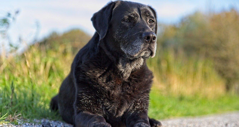 Hundefutter für Senioren - Die passende Ernährung für ältere Hunde
