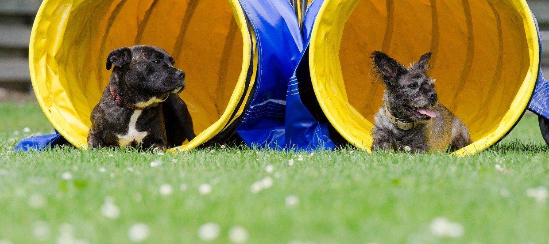 Hundeschule – Zusammen lernen fürs Zusammenleben