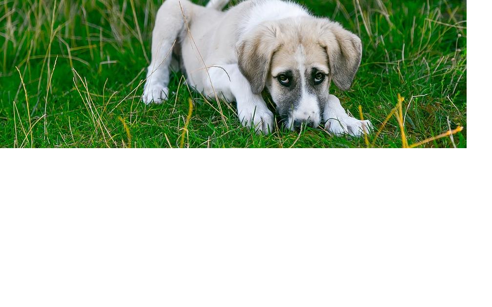 Wie können Sie Ihren Hund vor Giftködern schützen?