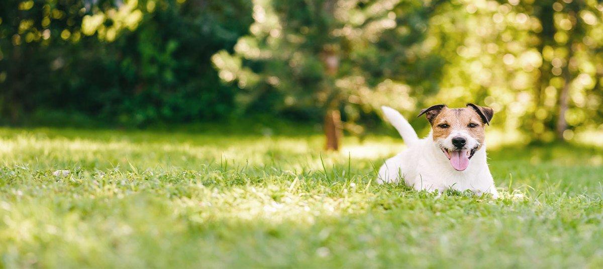 Hypoallergenes Futter – die Lösung für den Hund mit Futtermittelallergie?