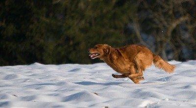 Das richtige Futter für Jagdhunde: Wie viel Fett, Kohlenhydrate und Eiweiß braucht Ihr Vierbeiner? Darauf kommt es an!