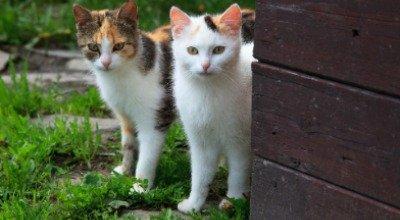 Katzen kastrieren – eine Sache des Tierschutzes
