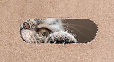 DIY: Fummelbrett für Ihre Katze einfach selber machen