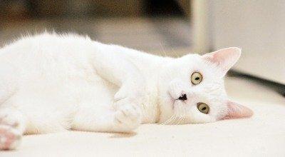 Bei Ihrer Katze die Krallen schneiden – wann ist es notwendig und wie funktioniert das richtig?
