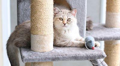 Katzen beschäftigen: Hilfreiche Tipps gegen Langeweile