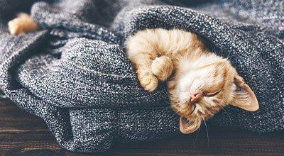 Katze eingewöhnen: So gelingt ein stressfreier Start