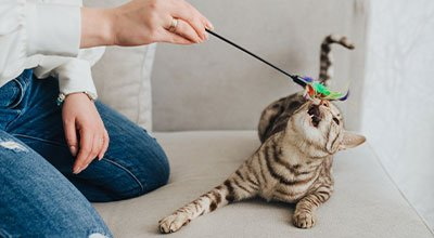 Katzen wollen spielen – ein Leben lang