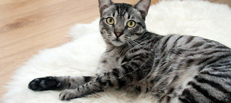 Katze zittert: Woran das liegen kann und was zu tun ist