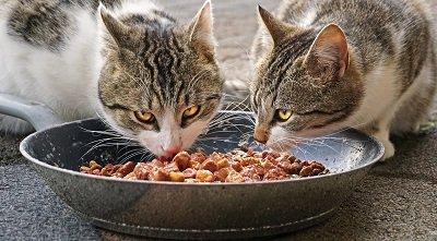 Katzenfutter im Test: Was wirklich zählt
