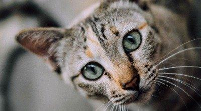 Verstehen Sie die Katzensprache?