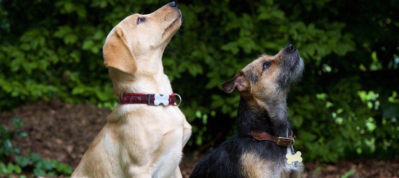 Hundekommandos – So klappt die Kommunikation mit dem Vierbeiner