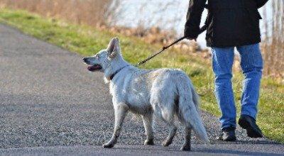 Schlepp-, Flexi- oder Führleine: Welche Leine ist für Ihren Hund die beste?