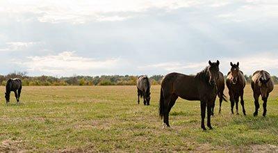 Mineralfutter fürs Pferd – Kleine Helfer, große Wirkung