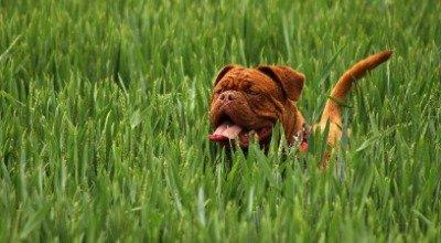 Nachhaltig leben mit Hund – so einfach kann's gehen!