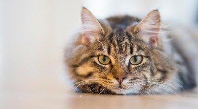 Tipps für ein nachhaltiges Leben mit Katze
