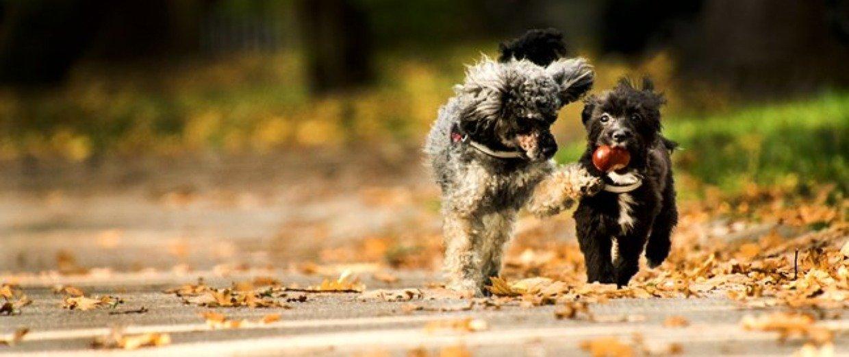 Mandeln, Walnüsse und Co.: Welche Nüsse sind für Hunde geeignet?