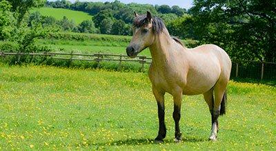 Hilfe! Mein Pferd ist zu dick! So specken Moppelpferde ab