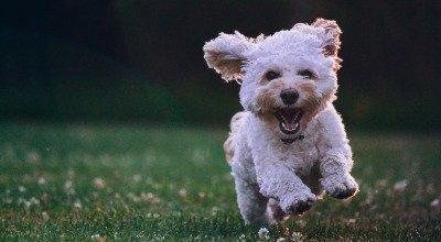 Welpenfutter - die richtige Ernährung für junge Hunde