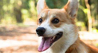 Nass- oder Trockenfutter im Vergleich – was ist das Beste für meinen Hund?