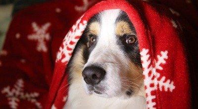 Weihnachten mit Hund: Tipps zum entspannten und sicheren Feiern