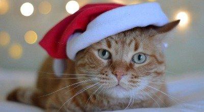 Weihnachten mit Katze: Die besten Tipps für sichere Feiertage