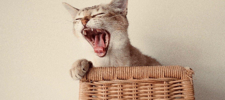 Damit die Katze kraftvoll zubeißt: Zahnpflege ist wichtig